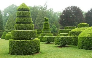 trim-those-hedges