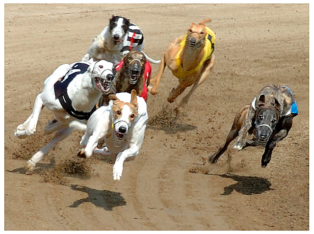 dog race all the way to the top