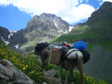 mule carrying frozen lasagnas to mountaintop