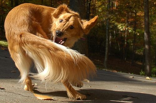 Aggression In Dogs. Admin funny dog aggression