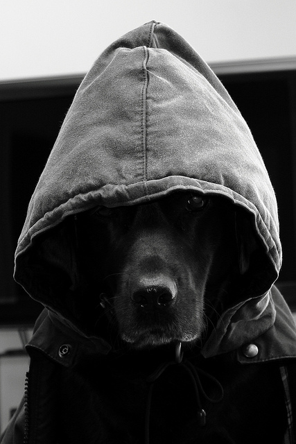 188 Hoods   1000 Aweso...